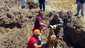 Kanalizasyona düşen koyun ve keçi kurtarıldı