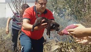 Alevlerin arasında kalan yavru köpekleri kurtardılar