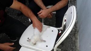 İtfaiye erinin kalbi duran kediyi kurtarma çabası kamerada