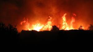 Çanakkale Gelibolu'daki yangında son durum Bakan Pakdemirli'den açıklama geldi…