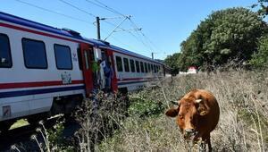 Hayvanların kurtarmak isterken trenin altında kaldı