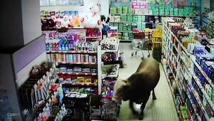 Boğanın markete girdiği o anlar kamerada