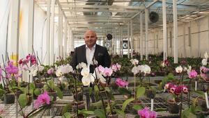Atık ısıyla orkideler açıyor