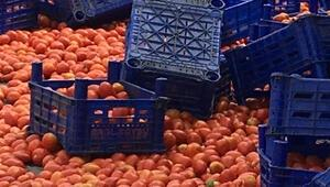 Çöp konteynerlerine dökülen domates görüntüleri ile ilgili açıklama