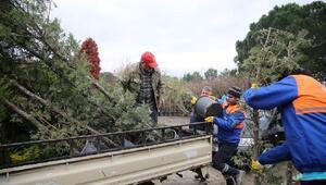 Nülifer'de gelecek yıl 15 bin metrekare alan ağaçlandırılacak