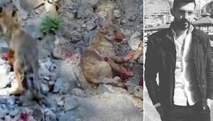 Erzurumda skandal görüntü Kurt yavrusuna işkence...