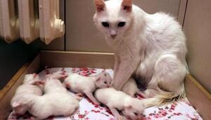 10 yavru doğuran Nazlıya ziyaretçi ilgisi