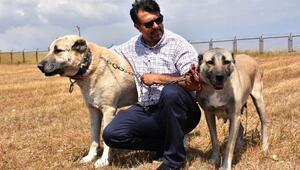 Interpol Daire Başkanı Çiçek: Kangallar, gönüllü asker olabilir
