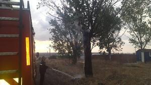 Edirnede yıldırım düşen ağaç yandı