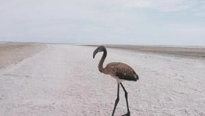 Yaralı flamingo, tedavisinin ardından doğaya bırakıldı