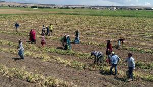 Nevşehirde tarım işçilerinin zorlu yaşamı