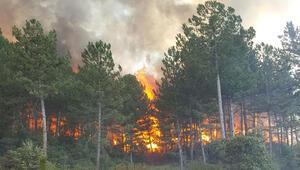 Son dakika... Uşakta orman yangını