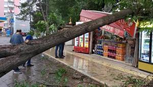 Elazığda ağaç kuvvetli rüzgarda devrildi