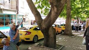 Taksicilerden kargalara karşı sapanlı nöbet