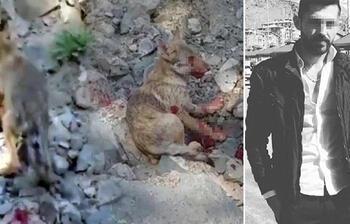 Erzurum'da skandal görüntü! Kurt yavrusuna işkence...