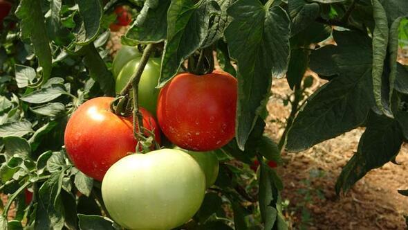 Burası İstanbul Seralarda tarım yapılıyor