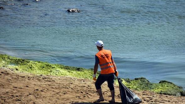 Karadenizin en uzun sahili yosunlardan temizleniyor