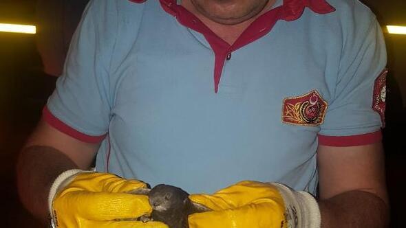Çatıya sıkışan Ebabil kuşunu, itfaiye kurtardı