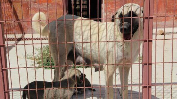 Elazığdaki hayvanların umudu hastane