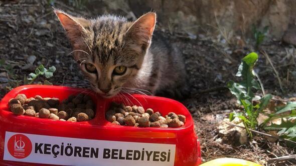 Sokak hayvanlarına beslenme noktaları