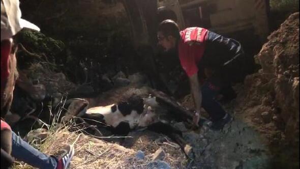 Kuyuya düşen ineği itfaiye kurtardı