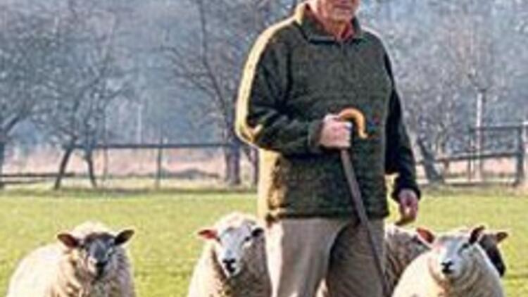 Koyun katliamında uzaylı şüphesi