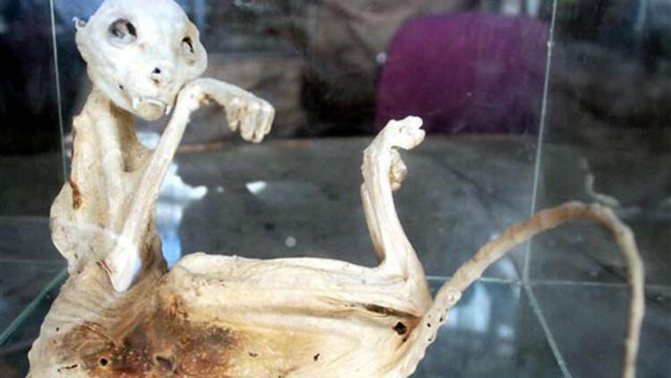 Bulduğu ilginç hayvan iskeletini sergiliyor