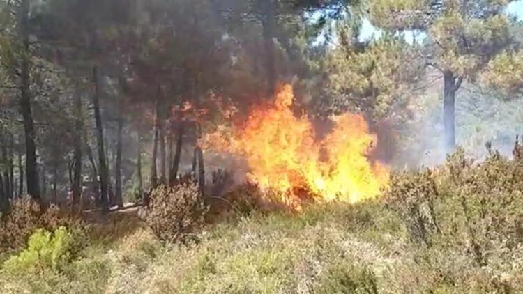 Son dakika... Sultanbeyli'de orman yangını
