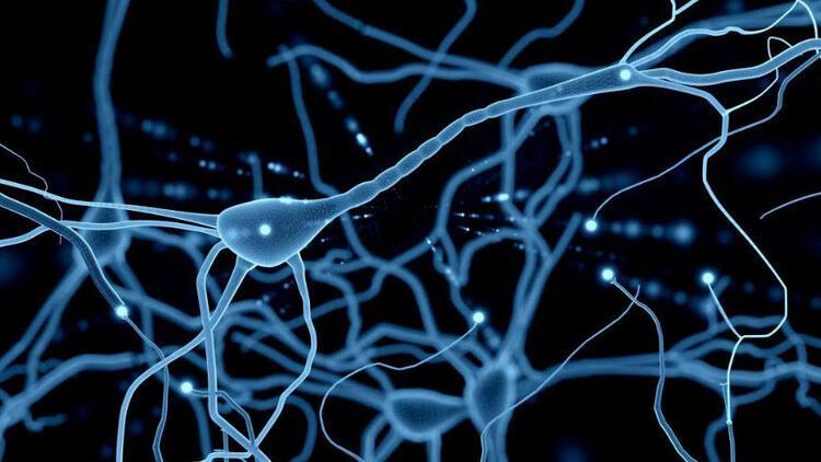 Nöronlardaki kusurlu proteinleri ayıklayan molekül bulundu