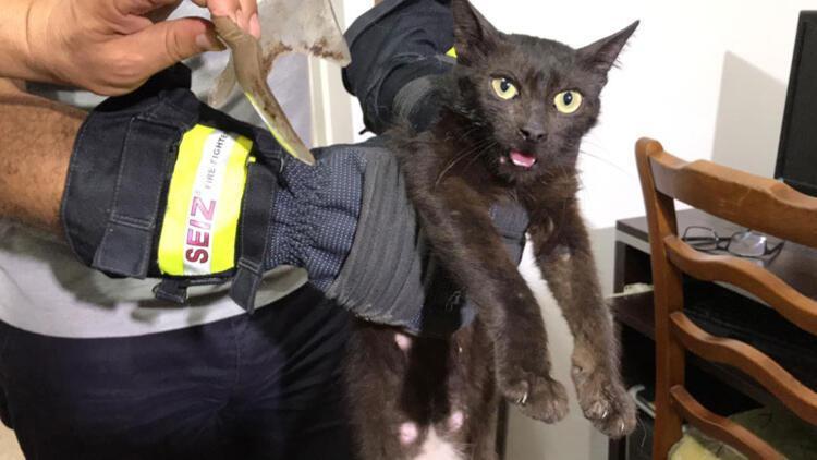 """""""İnatçı"""" kedi yakalandı"""