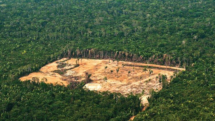 Bolsonaro'dan Amazon kıyımı