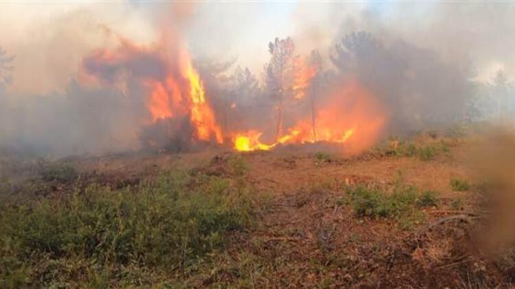 Bursa'daki şüpheli yangında 30 hektarlık alan zarar gördü