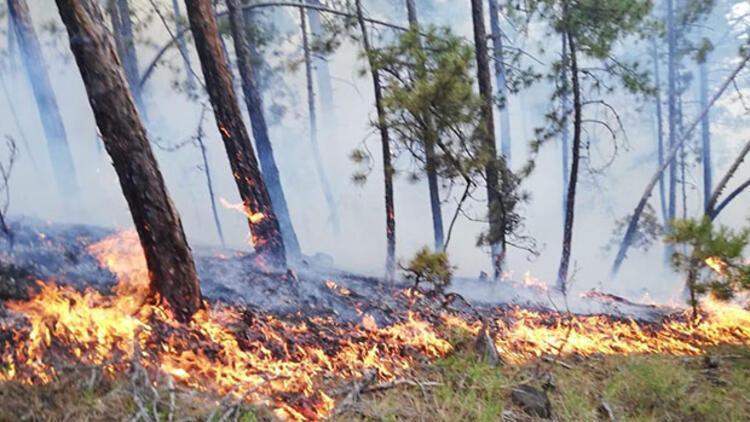 Son dakika... Sinop'taki orman yangını 2 saatte söndürüldü