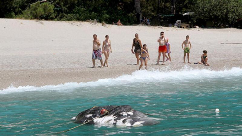 Sahile 3 metre uzunluğunda ölü balina vurdu