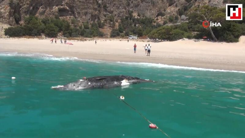 Dead whale washes ashore in Turkey's Fethiye