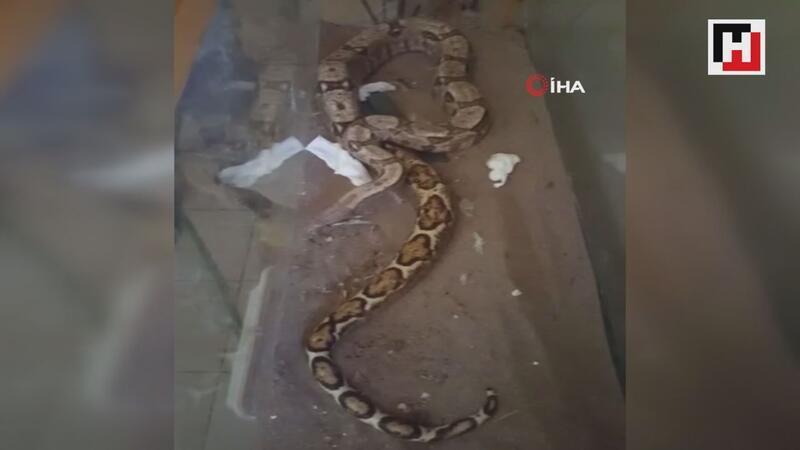 Antalya Otogarı'nda yılan operasyonu kamerada