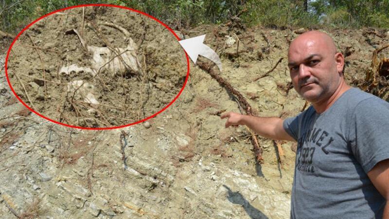 Bigadiç'te yol kenarında çok sayıda kemik ortaya çıktı