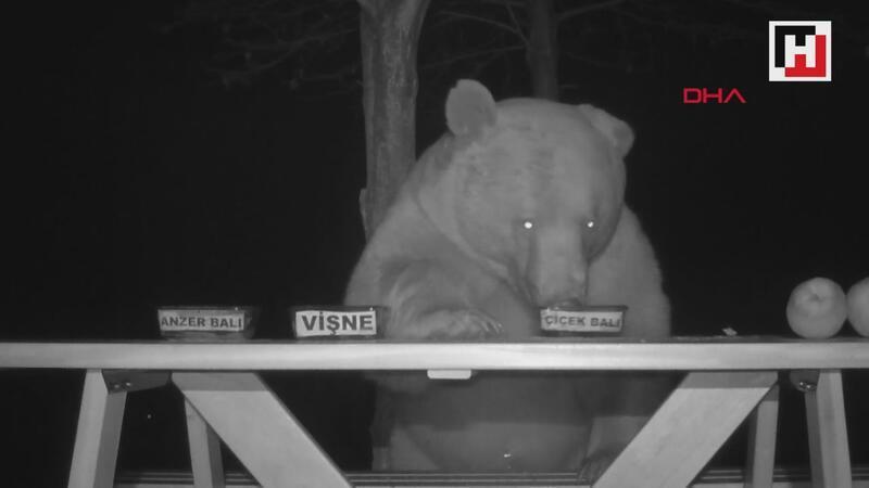 Tesise dadadan ayıların bal testi kamerada