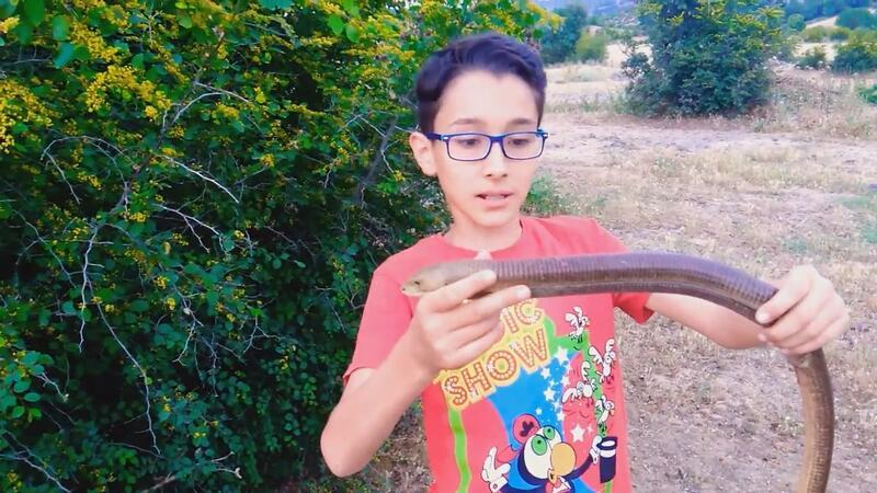 12-year-old boy becomes social phenomenon with animal videos