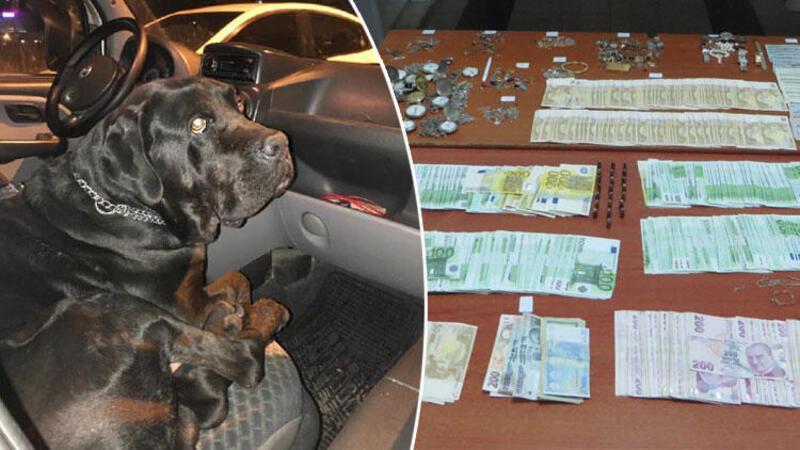 Hırsızlar, köpeklerle korunan villada yakalandı