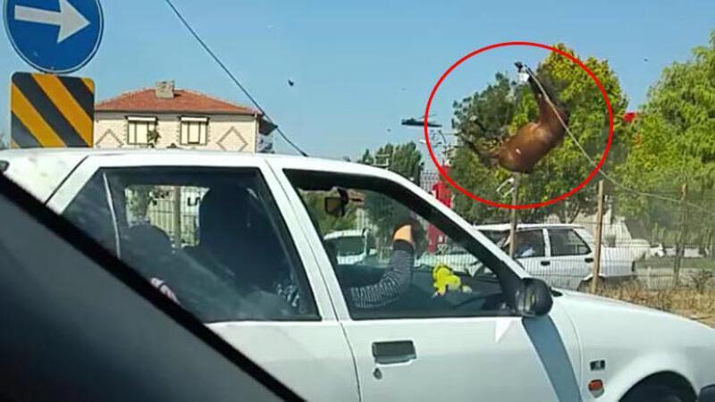 Otomobilin çarptığı atlar, telef oldu