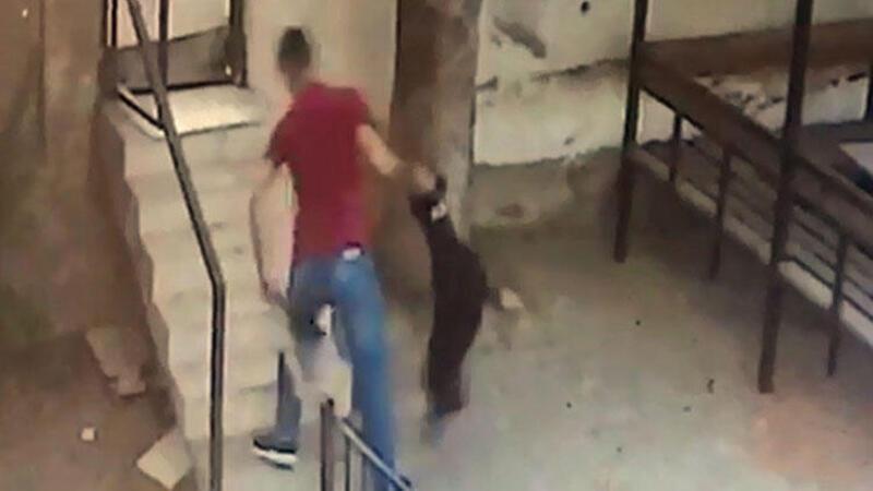 5 kediyi öldüren köpeğe sahibinden dayak kamerada
